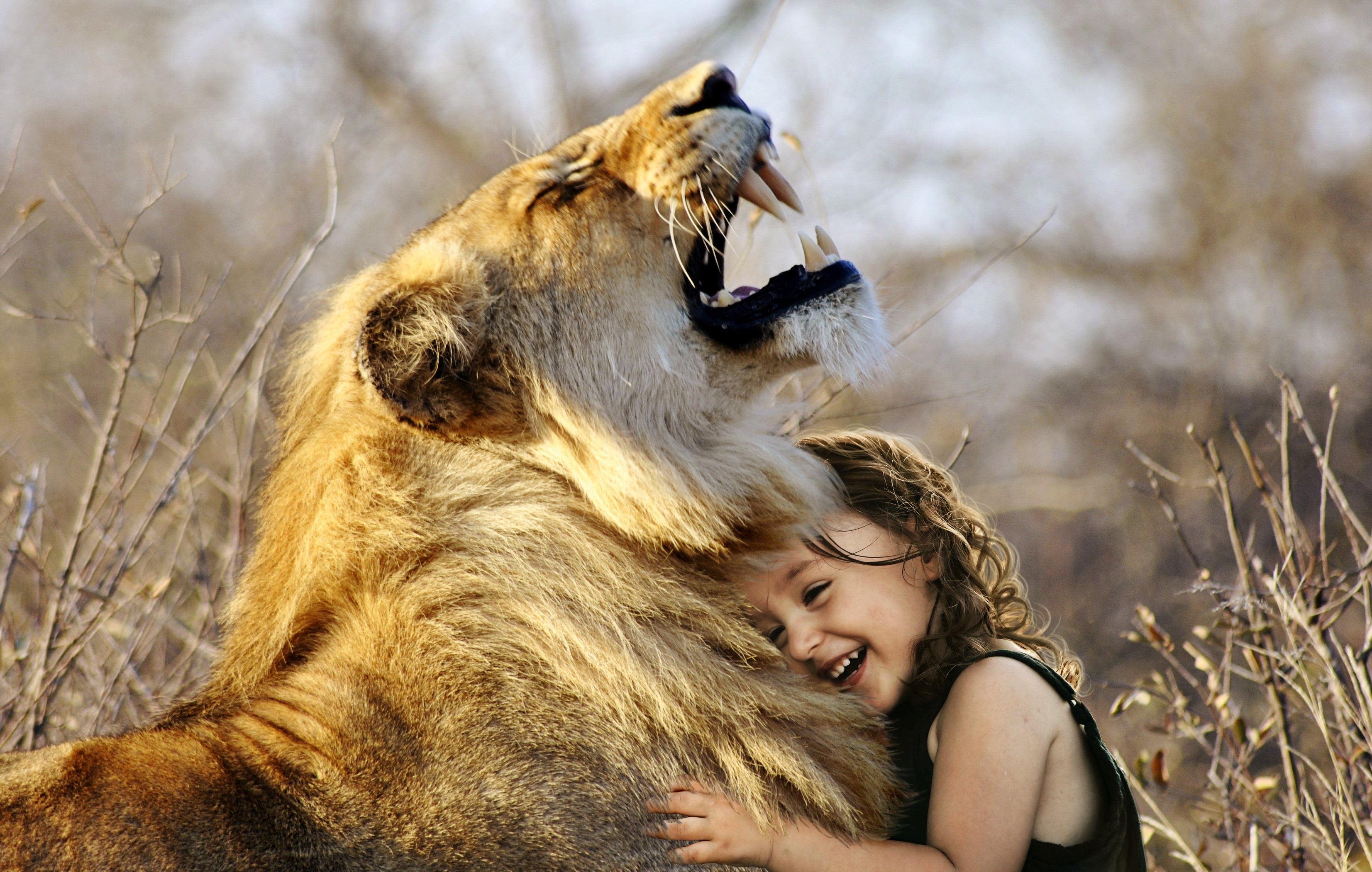 little girl hugs lion roaring cute 4k hd animals 4k wallpapers images backgrounds photos. Black Bedroom Furniture Sets. Home Design Ideas