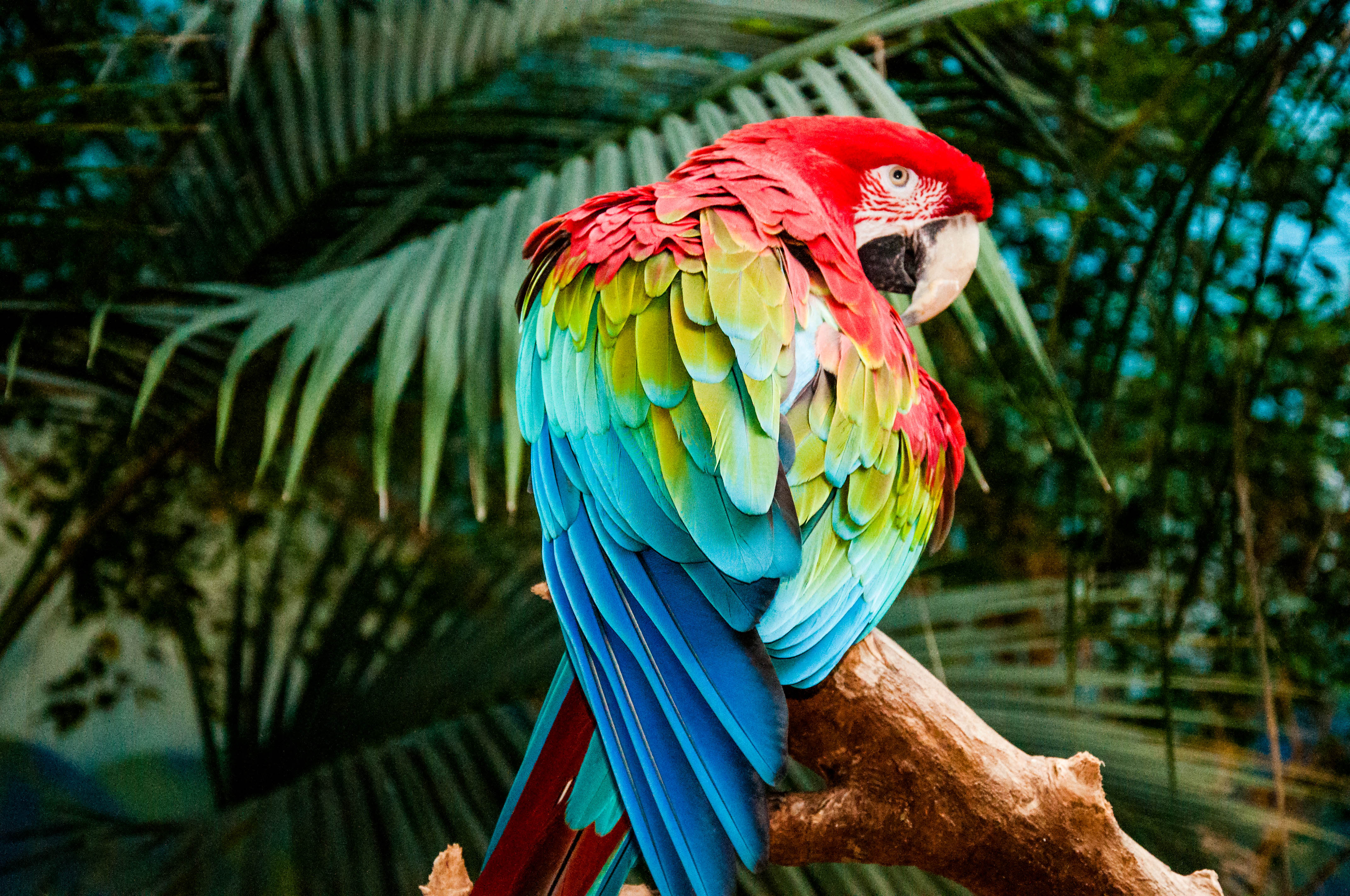 Parrot 105 Macaw Colorful Bird 4k...