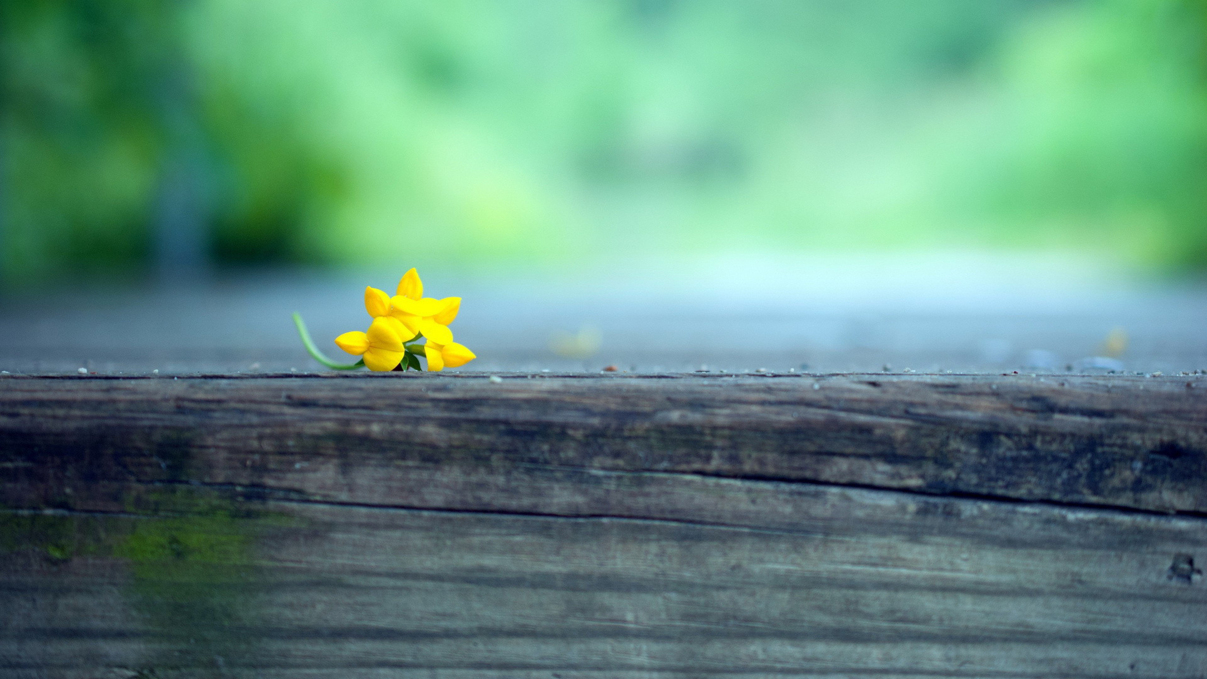 Macro Yellow Flower Blur Hd Photography 4k Wallpapers Images