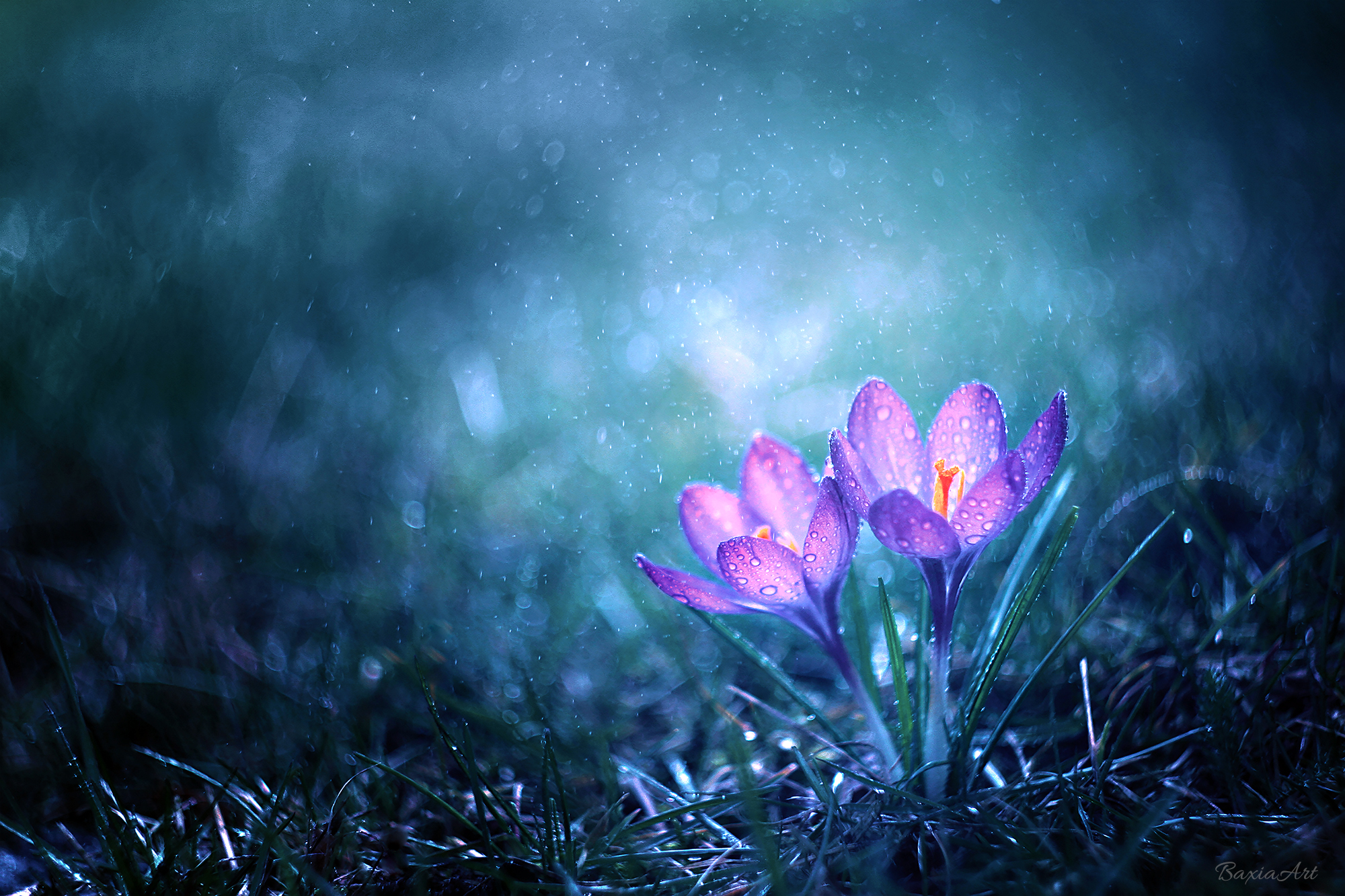 Magical Flower Morning, HD Nature, 4k Wallpapers, Images ...