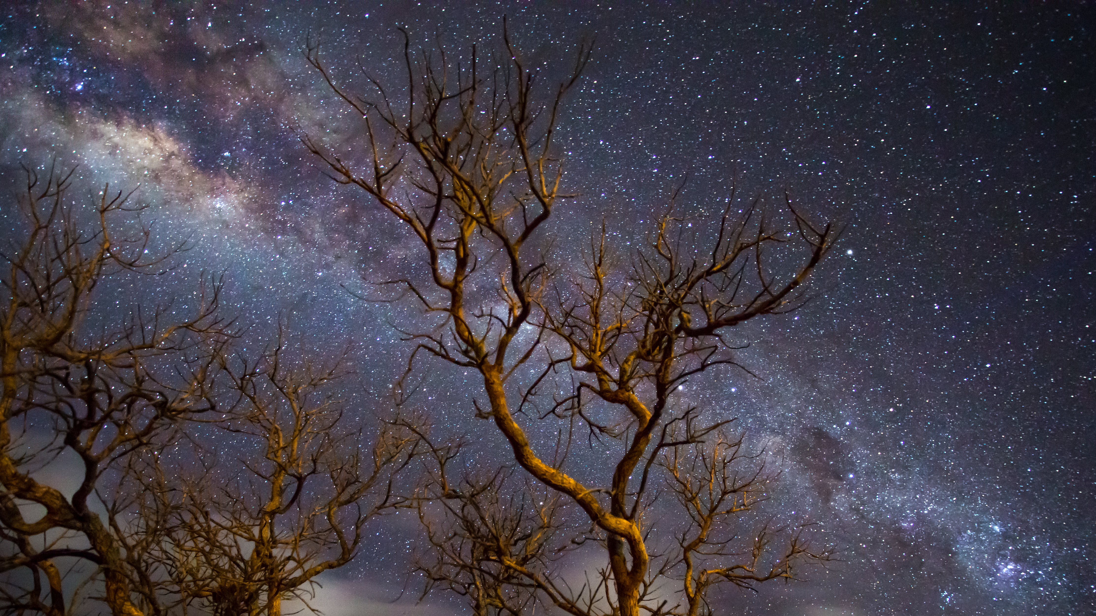 Milky Way Galaxy Tree Dark 4k Hd Nature 4k Wallpapers