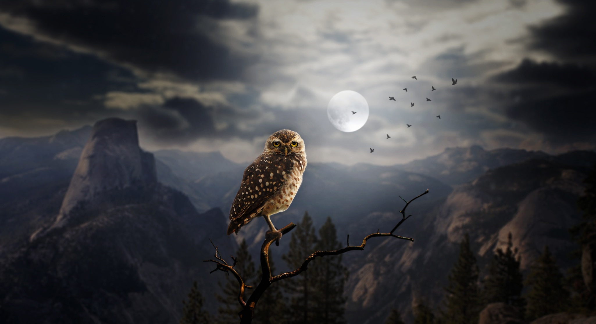 moon fantasy owl, hd others, 4k wallpapers, images, backgrounds
