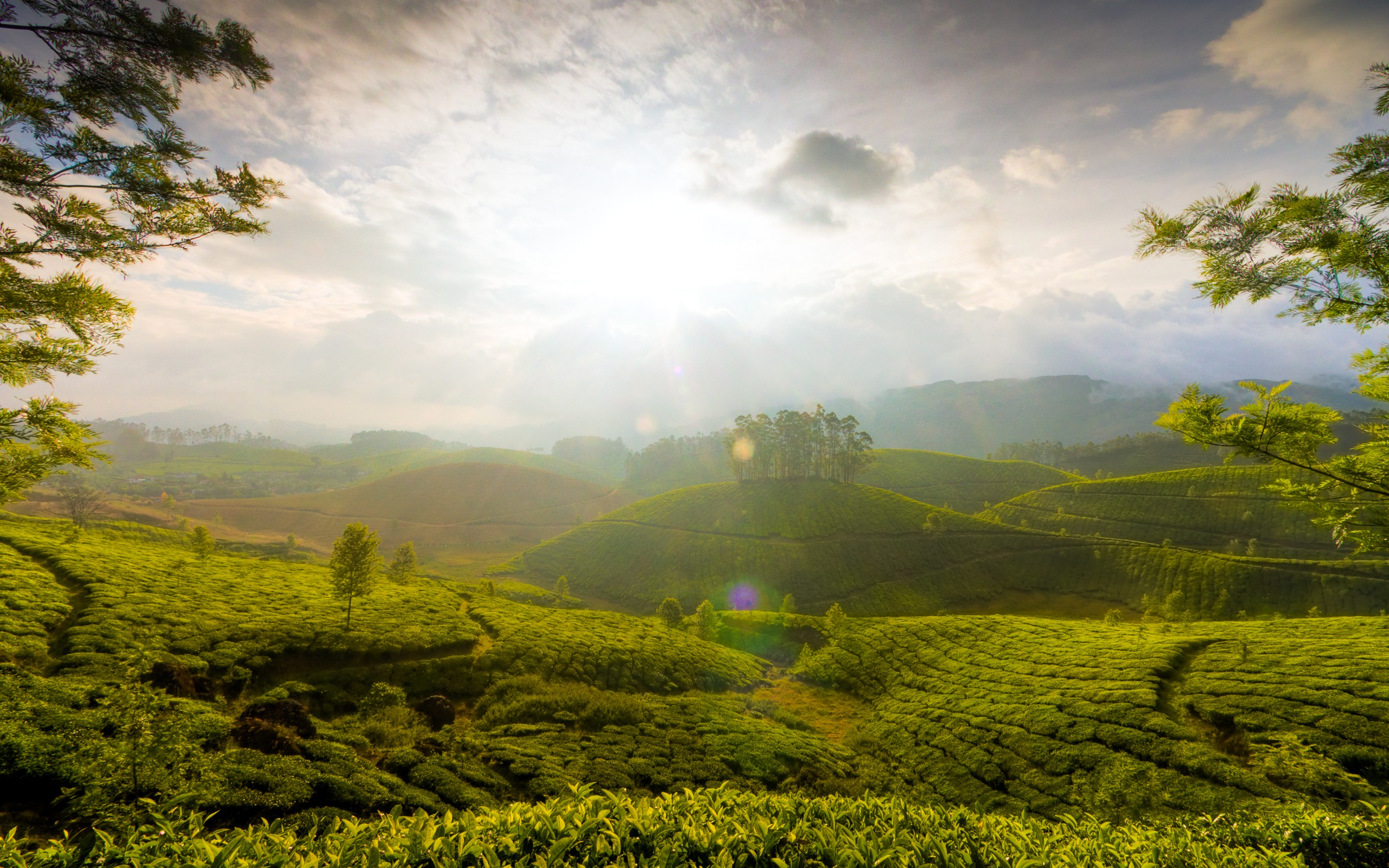 munnar hills india, hd world, 4k wallpapers, images, backgrounds