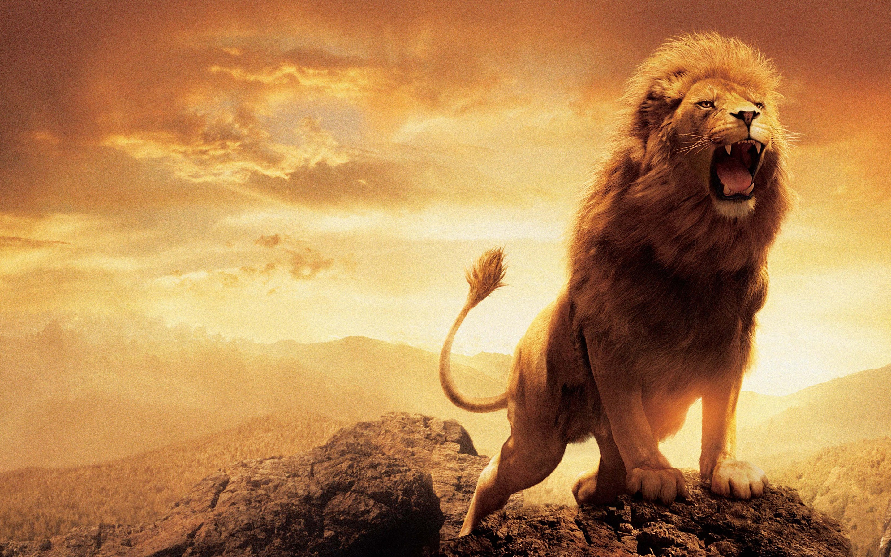 1366x768 narnia lion 1366x768 resolution hd 4k wallpapers, images