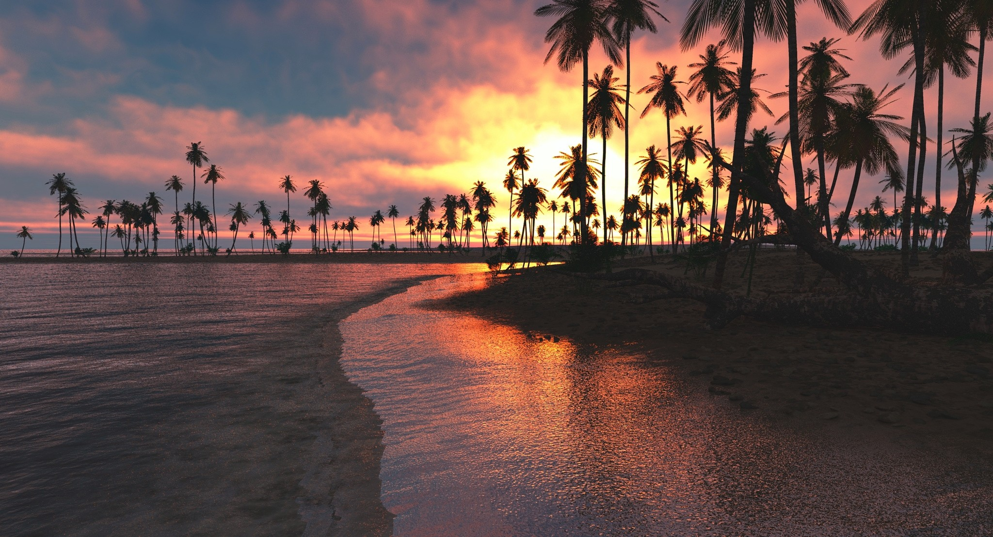palm trees sunset sea hd nature 4k wallpapers images