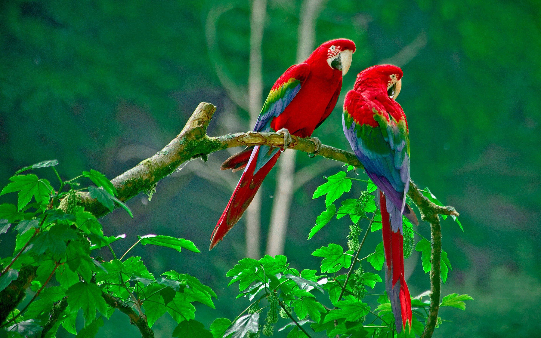 parrots paradise, hd birds, 4k wallpapers, images, backgrounds