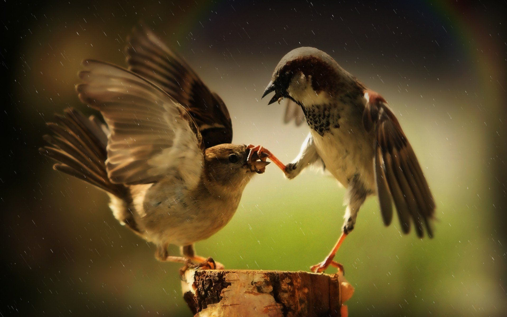 Funny Wallpapers For Laptop 60 Images: Passerines, HD Birds, 4k Wallpapers, Images, Backgrounds