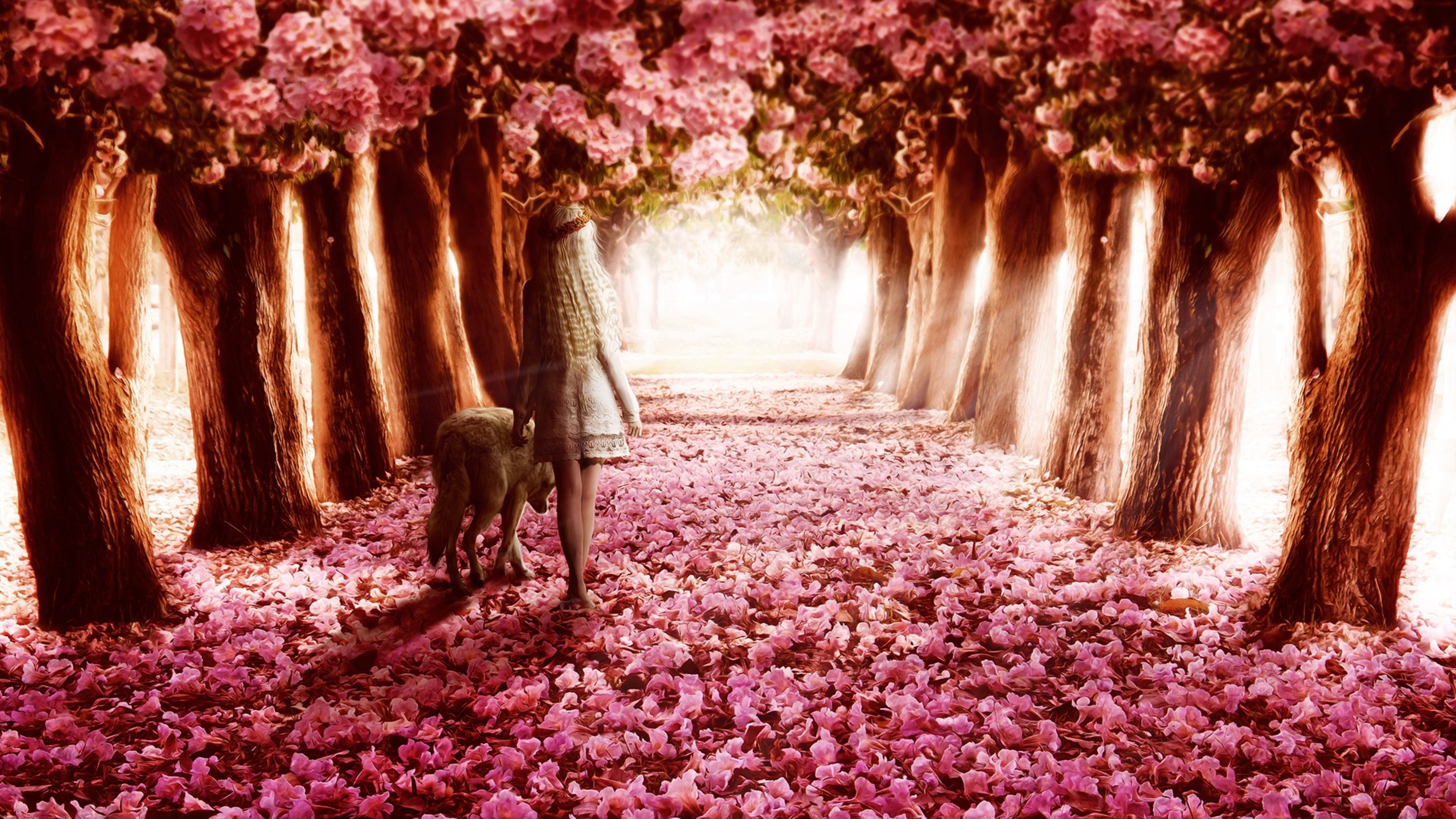 Pink flowers path hd flowers 4k wallpapers images backgrounds pink flowers path mightylinksfo