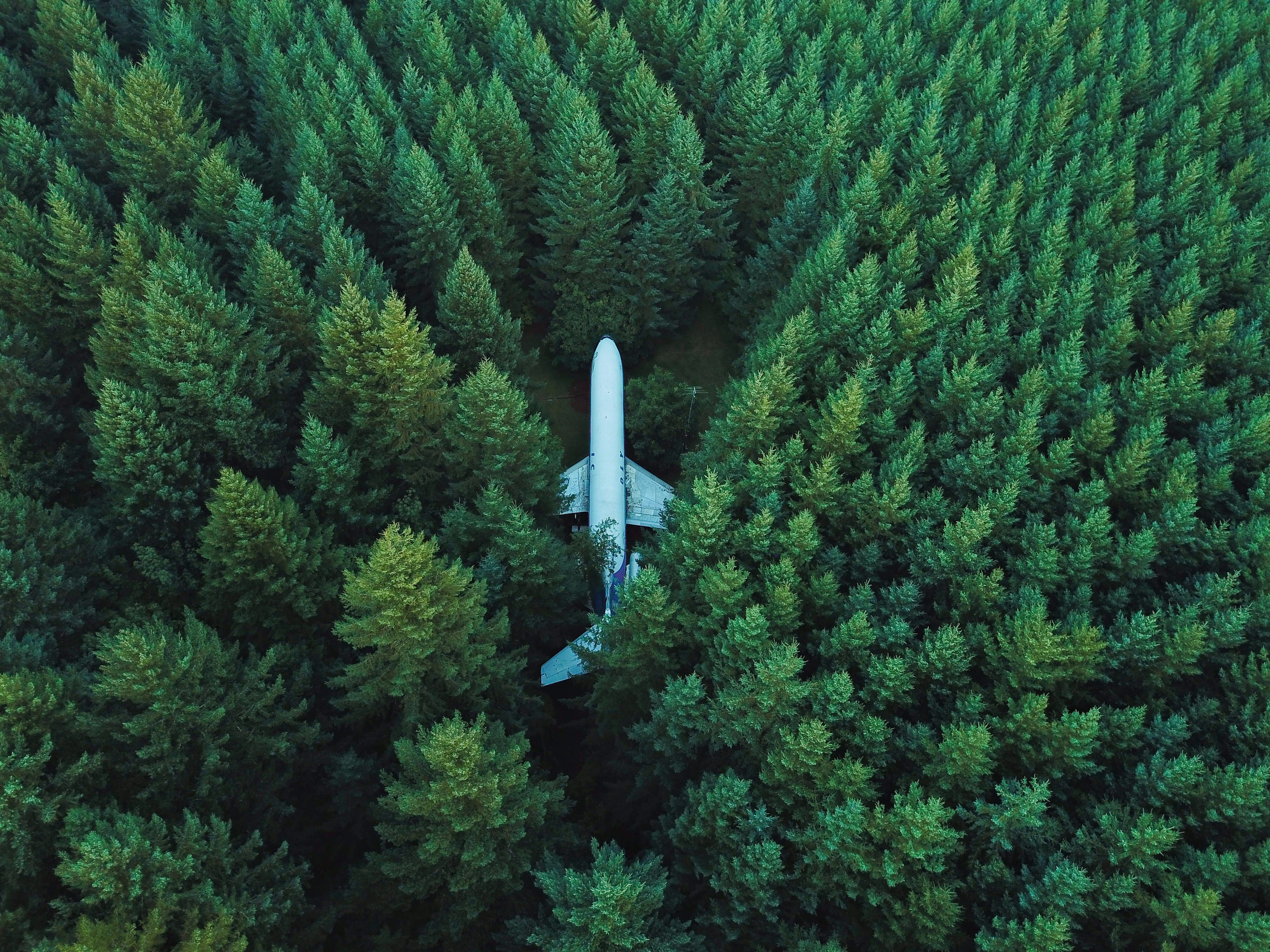Plane In Middle Of Forest 4k Hd Planes 4k Wallpapers