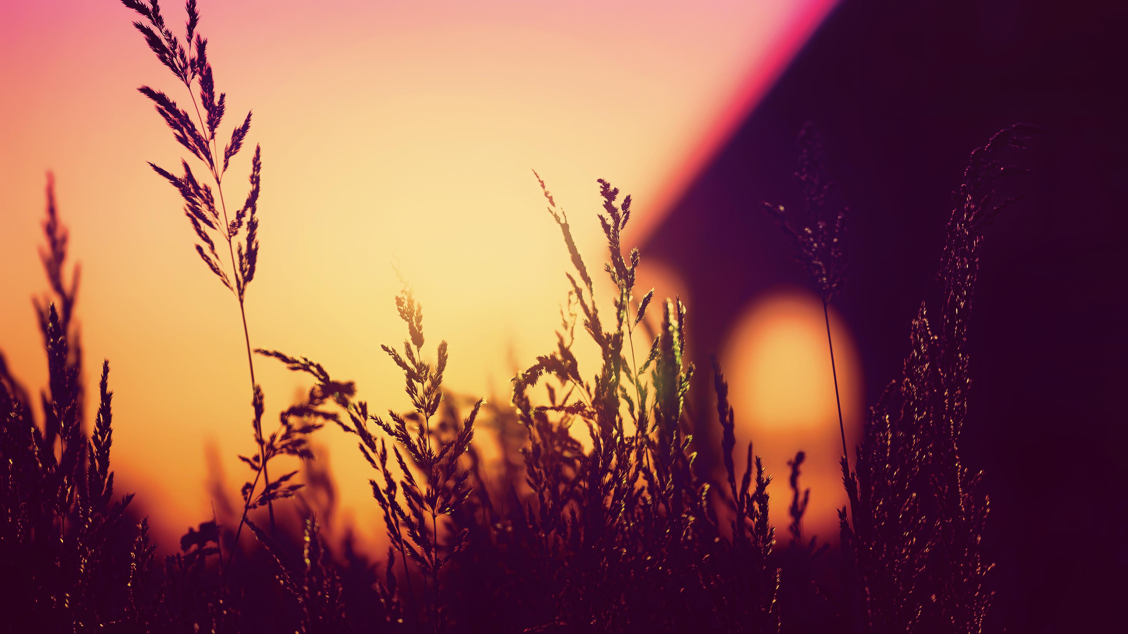 Plants Blurred Silhouette Sunset 4k, HD Nature, 4k