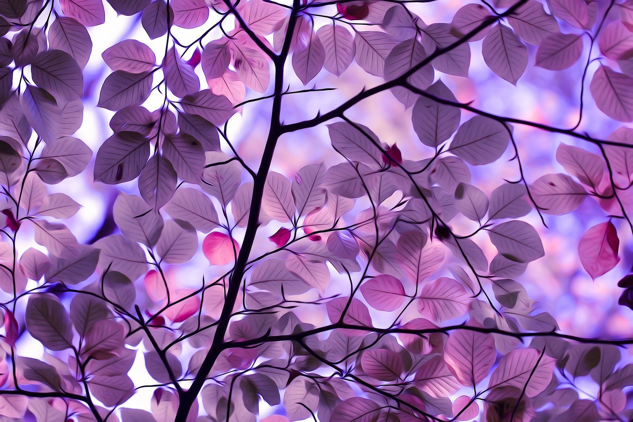 purple leaves hd nature 4k wallpapers images