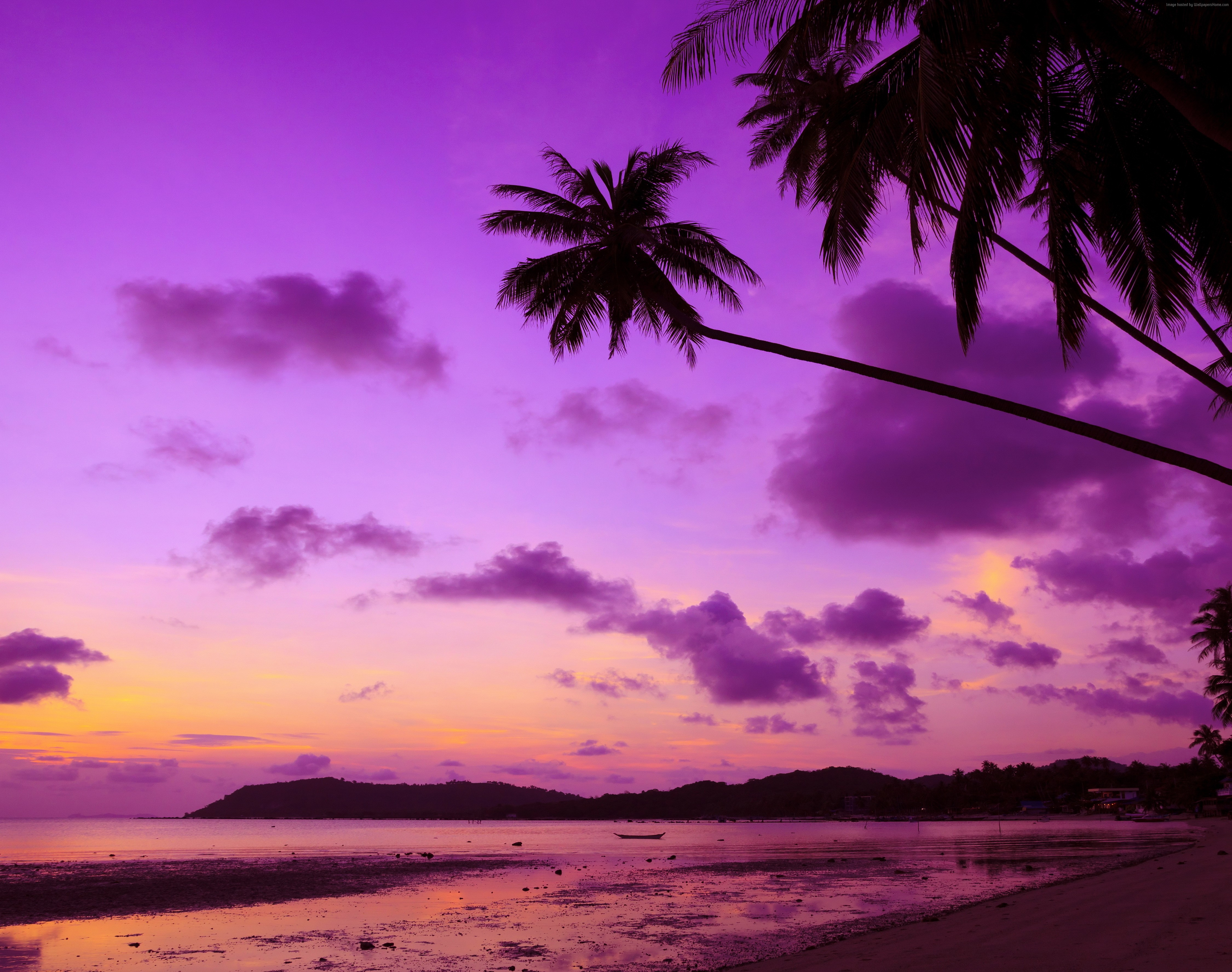 purple palm tree hd nature 4k wallpapers images backgrounds
