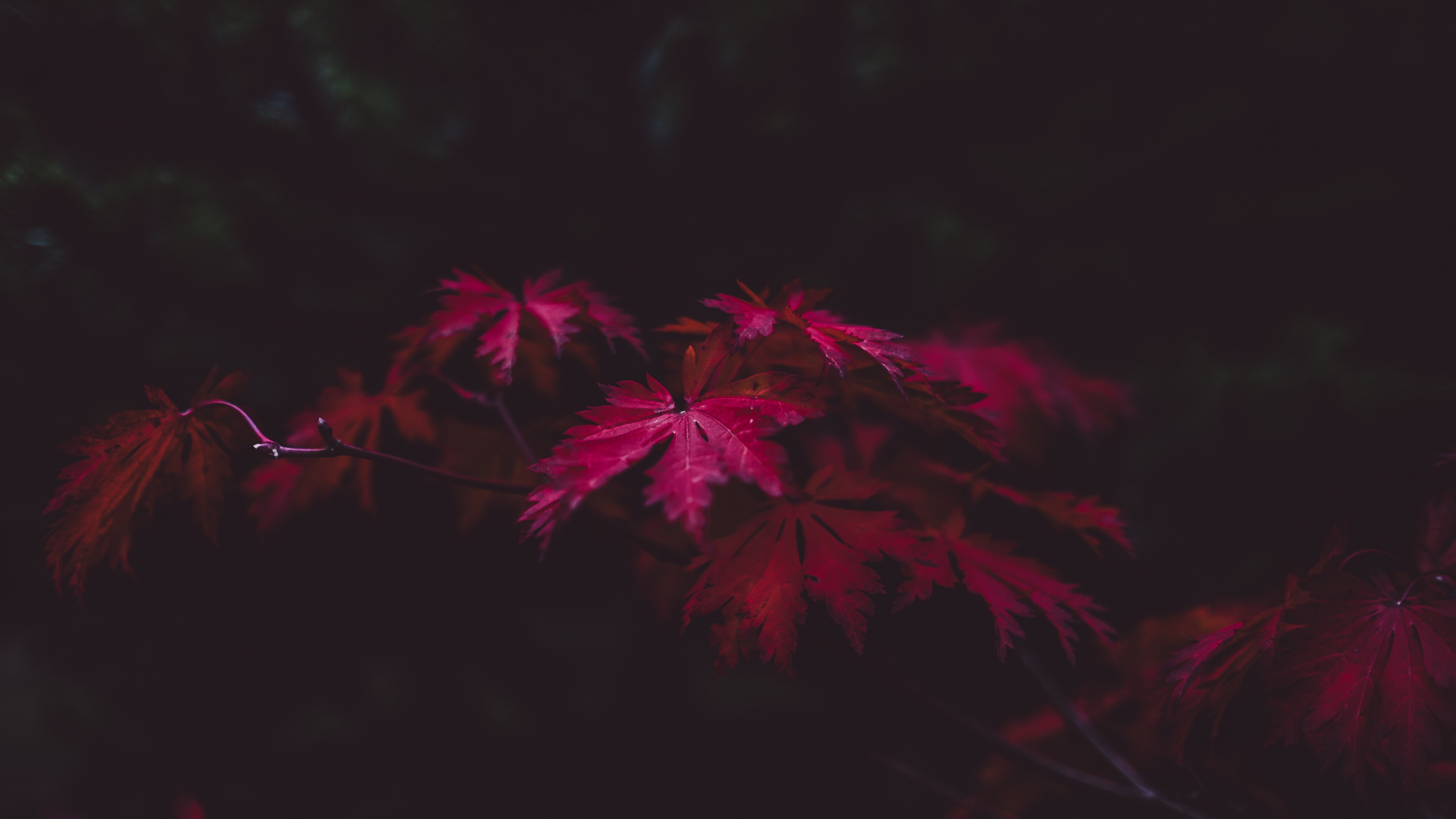 Red Leaves 4k Hd Nature 4k Wallpapers Images Backgrounds