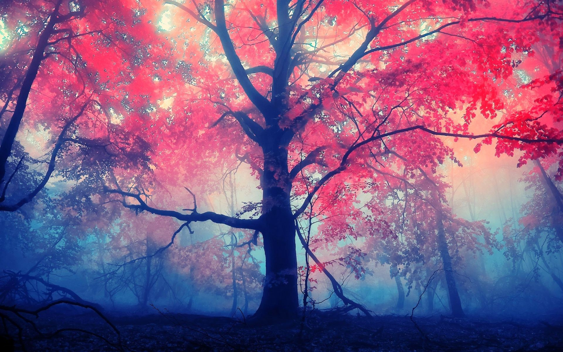 Red Leaves Tree