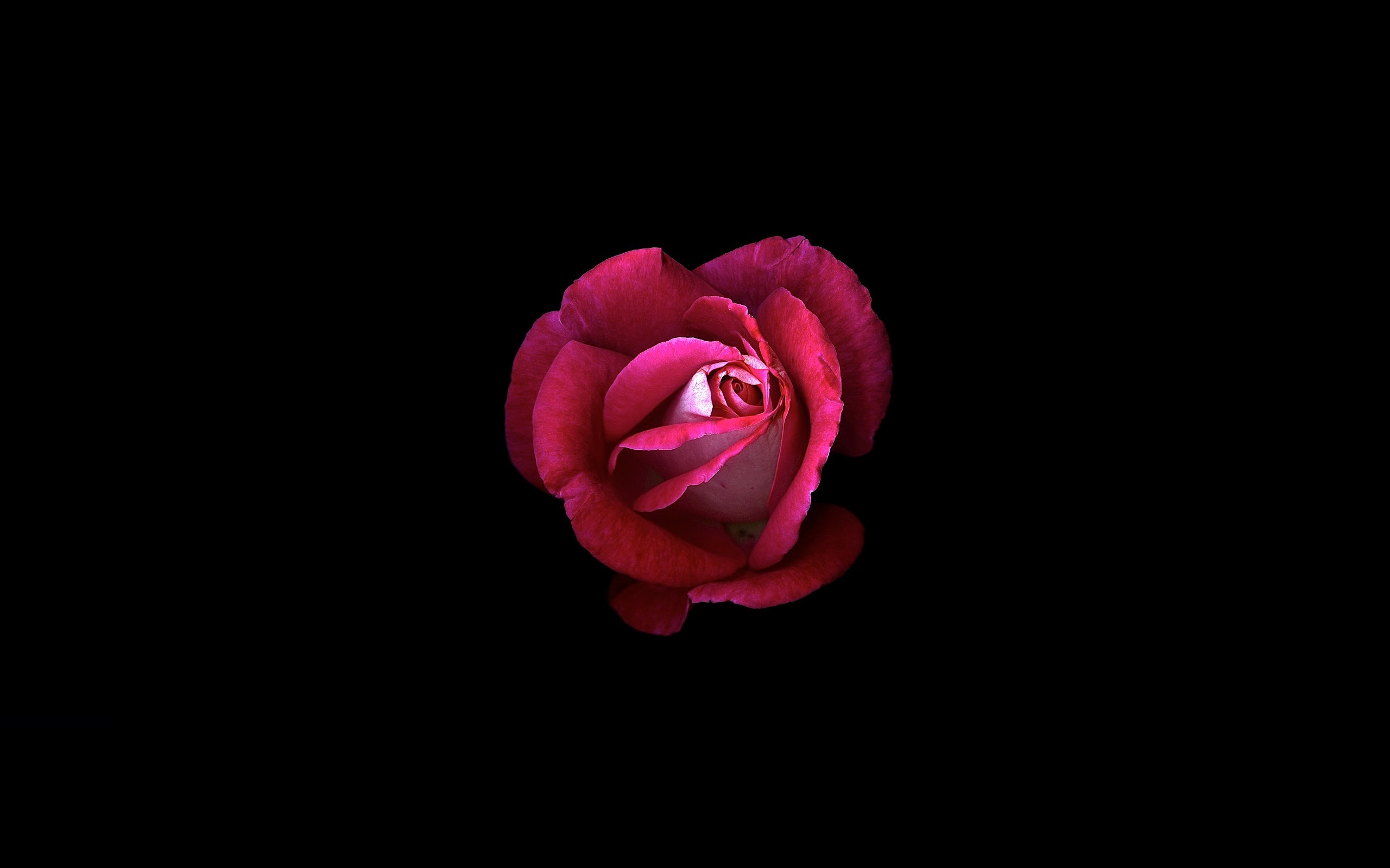 750x1334 Red Rose Dark Oled Iphone 6 Iphone 6s Iphone 7 Hd 4k