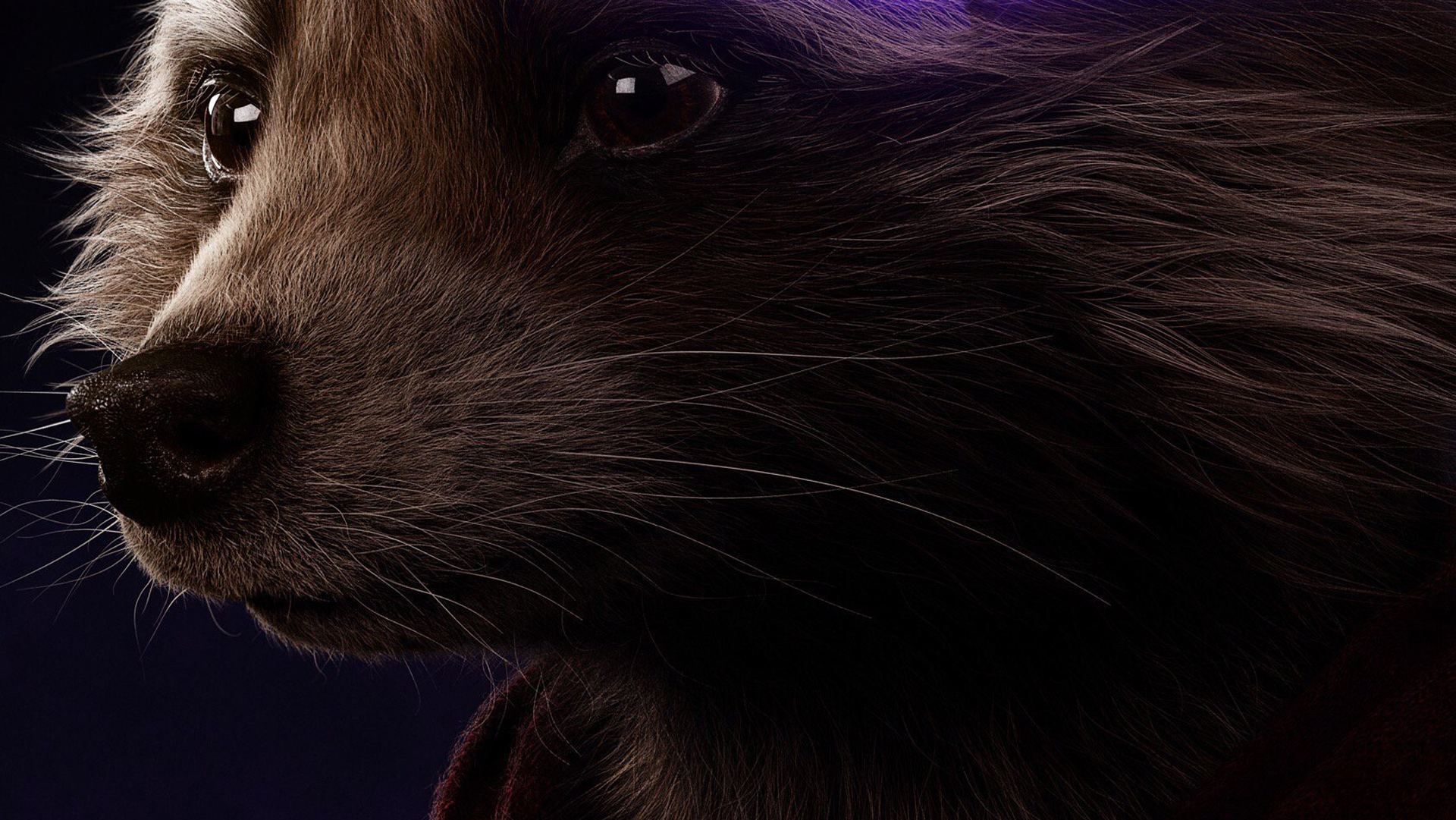 Rocket Raccoon Avengers Endgame 2019 Poster Hd Movies 4k