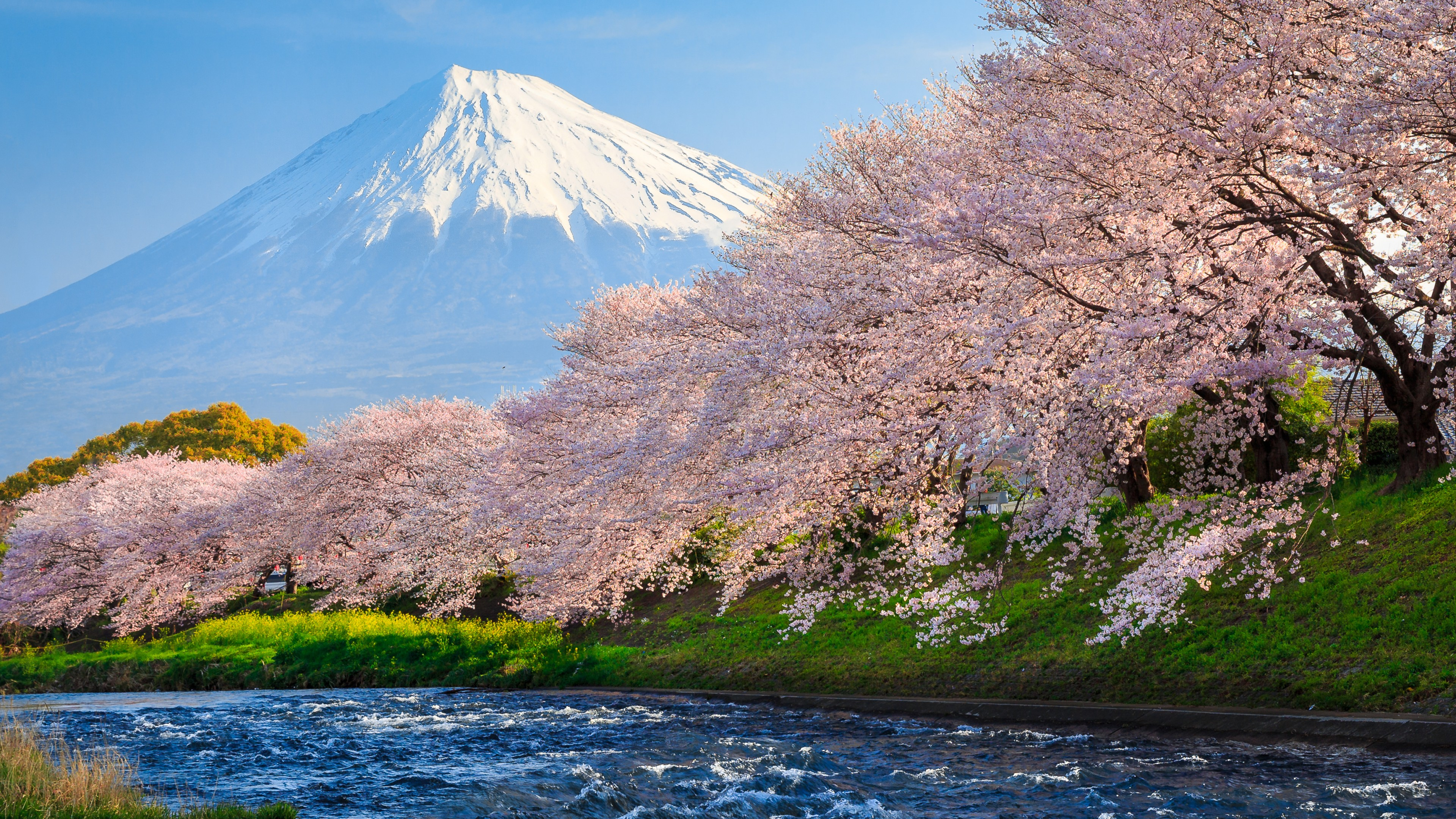 Sakura River Japan HD World 4k Wallpapers Images Backgrounds