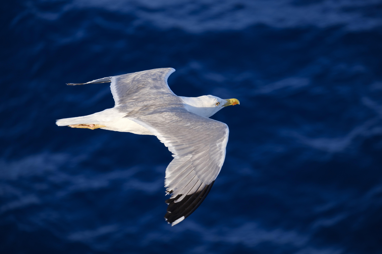 Seagull wallpaper | 1920x1080 | #75039