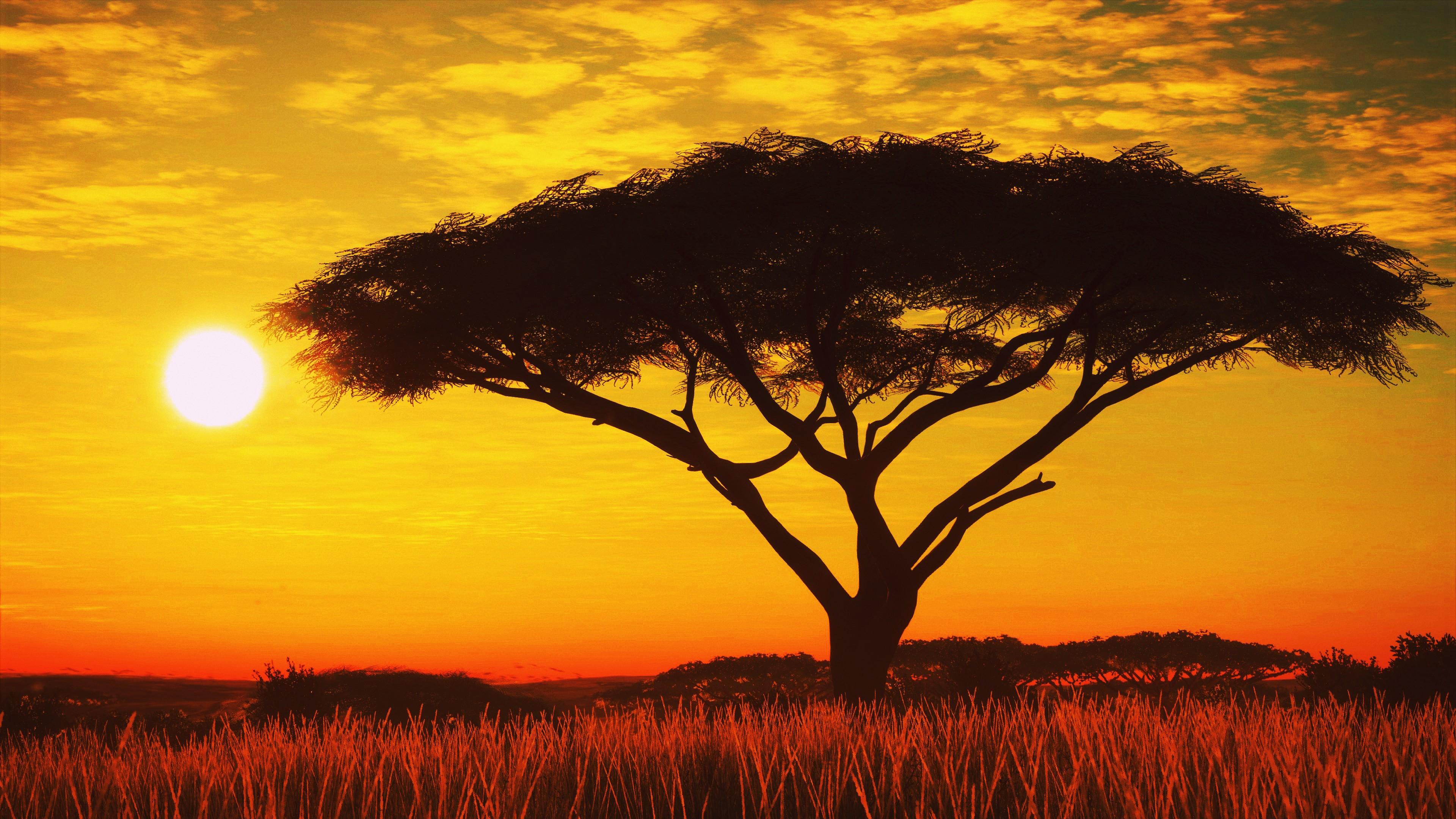 Serengeti Sunset 4k Hd Nature 4k Wallpapers Images