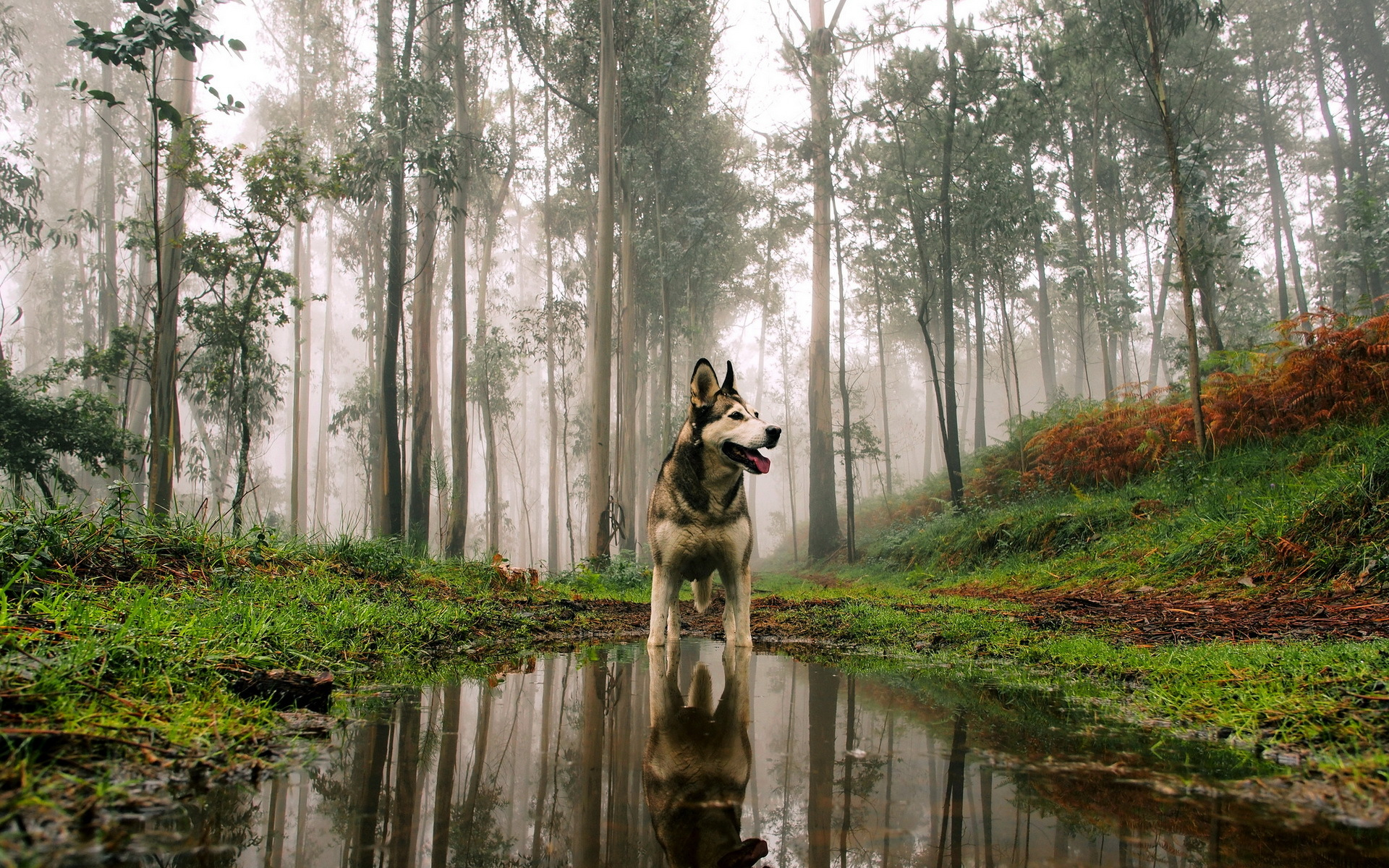 Siberan Husky 3 Hd Animals 4k Wallpapers Images Backgrounds
