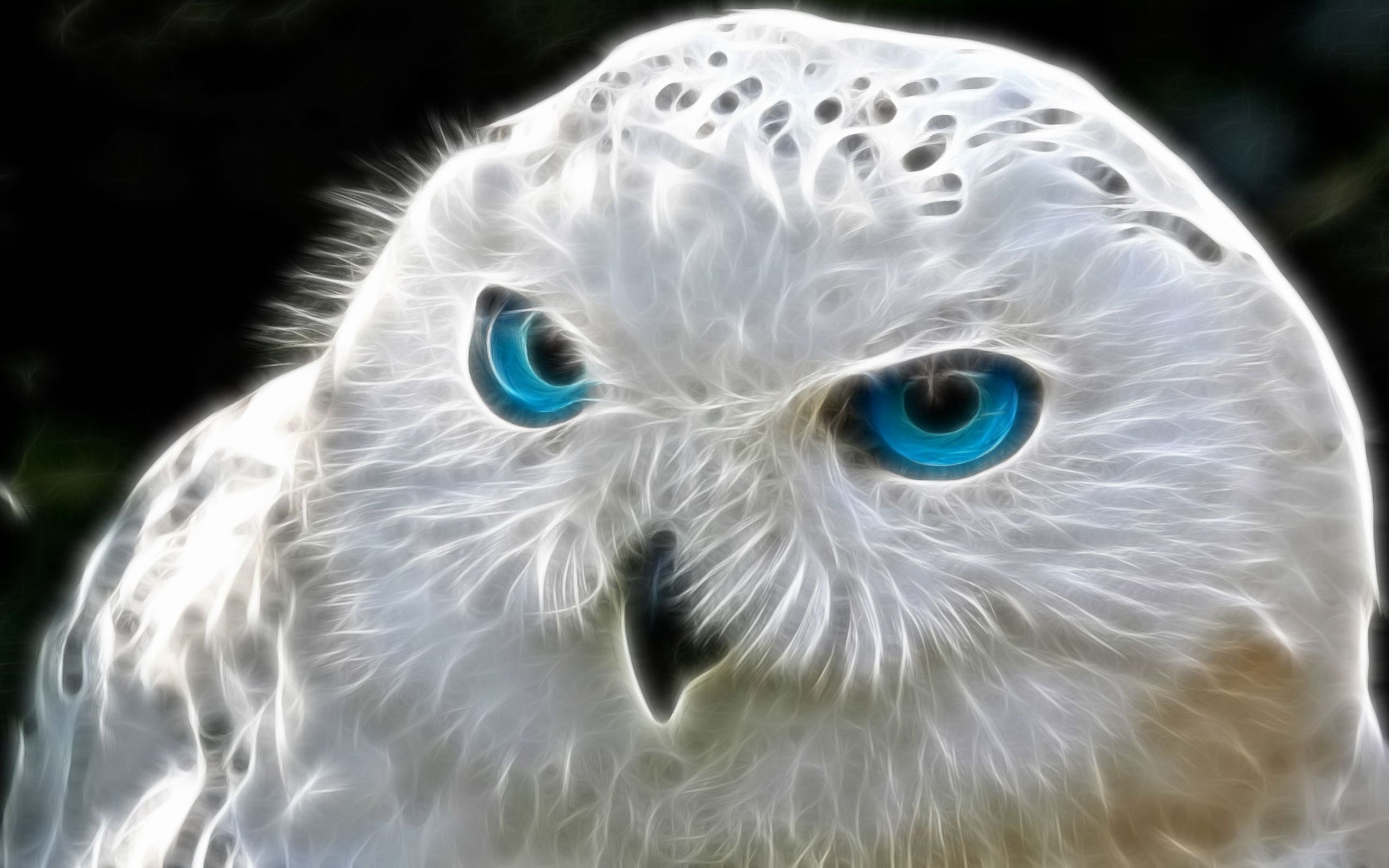 2048x1152 Snowly Owl Art 2048x1152 Resolution Hd 4k