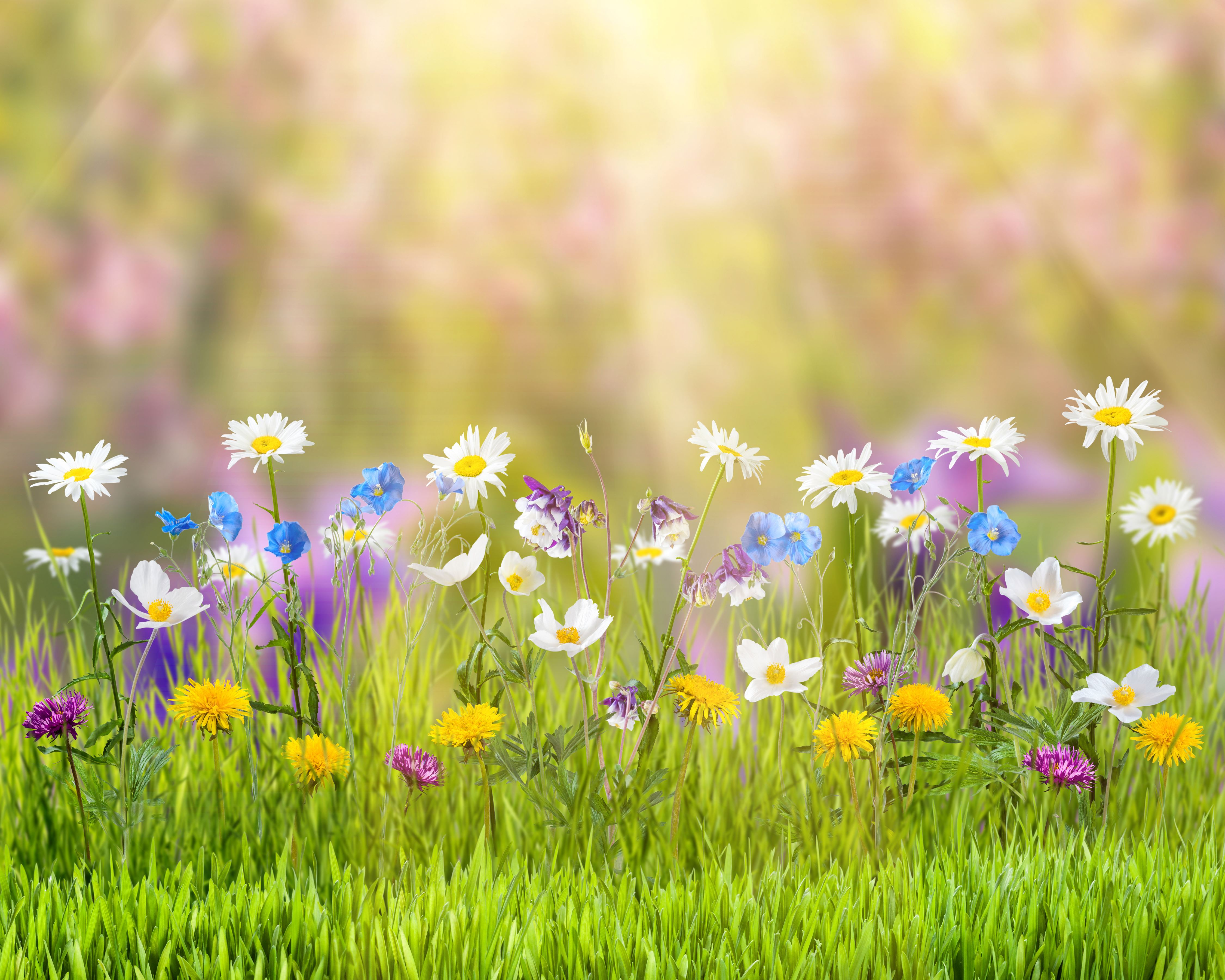 Spring 4k Wallpapers Hd 50736 Wallpaper: Spring, HD Flowers, 4k Wallpapers, Images, Backgrounds