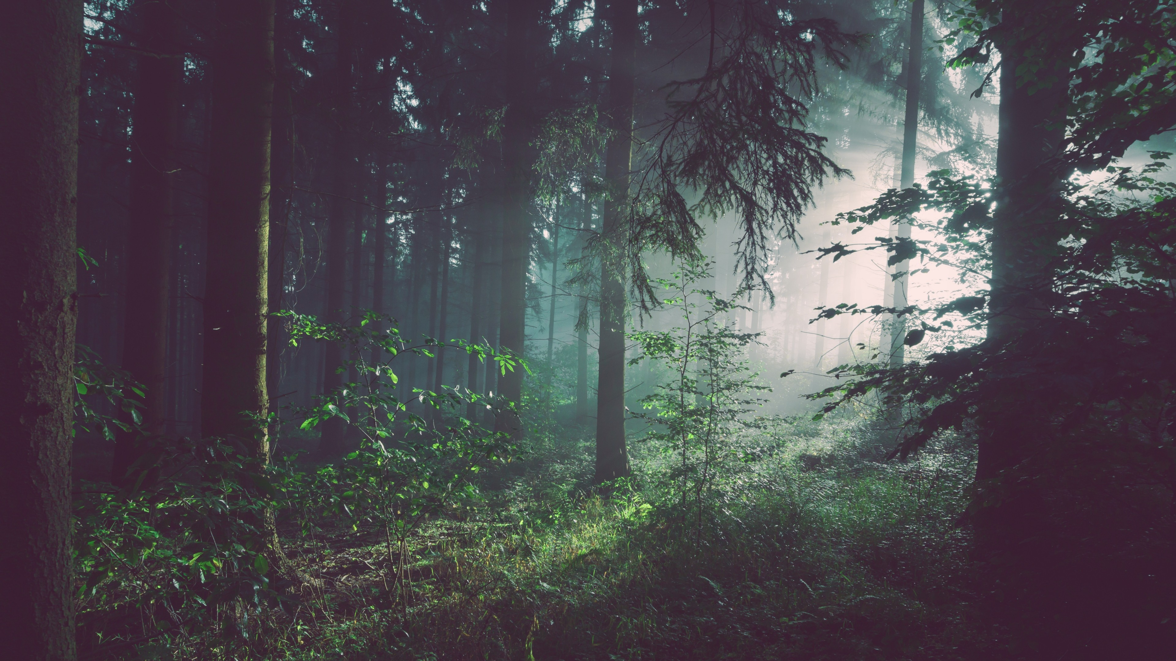 Ultra Hd Wallpaper 4k Green Mountains Natural Trees: Sunbeams In Woods, HD Nature, 4k Wallpapers, Images
