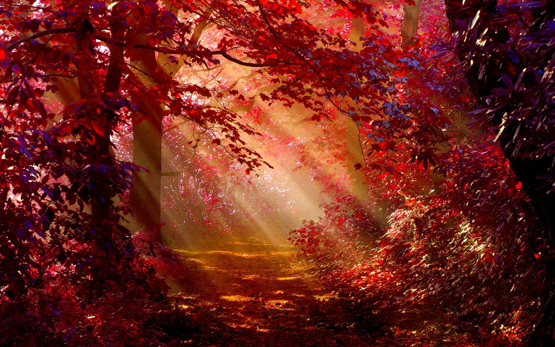 Sunlight In Autumn Forest