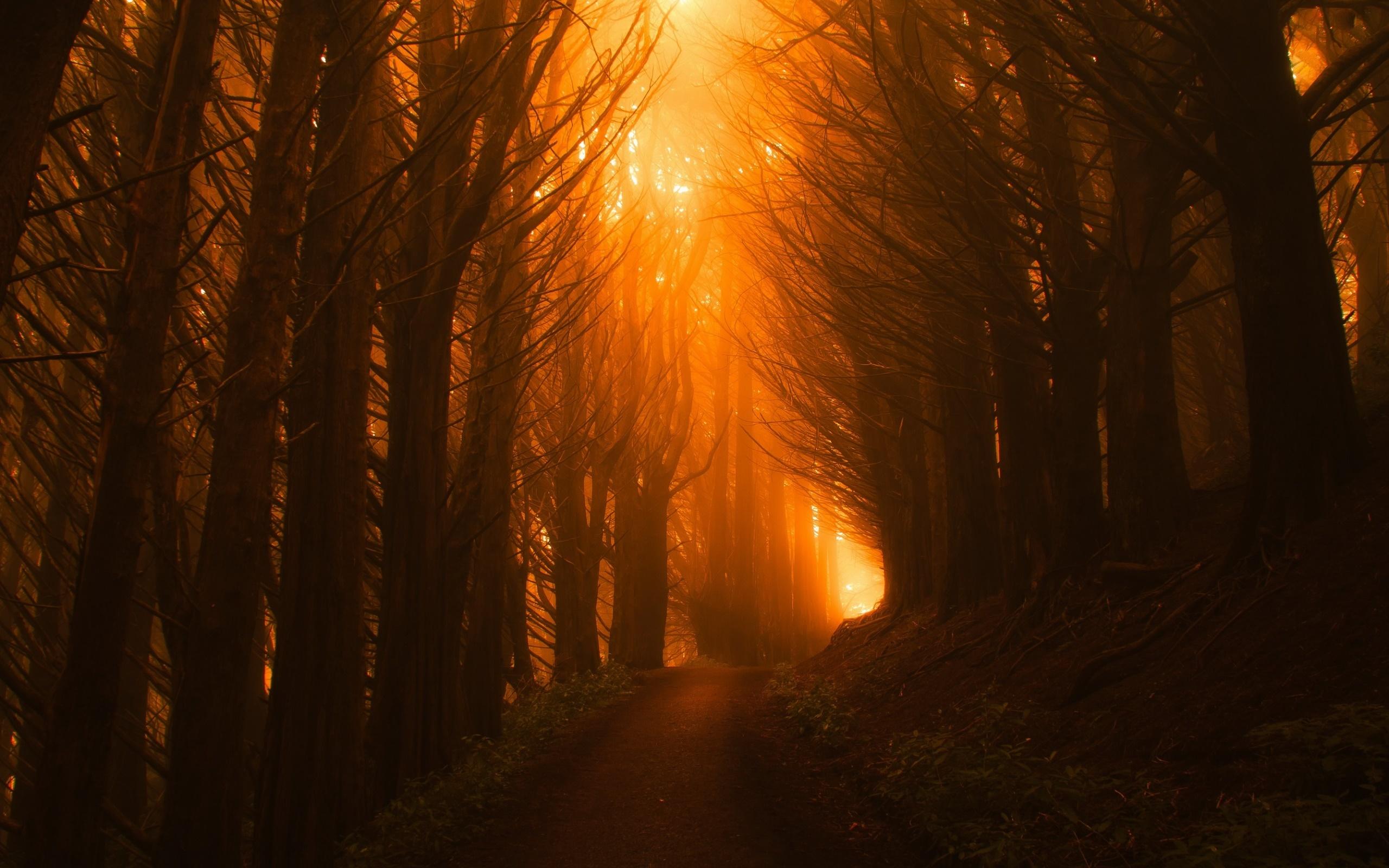 Sunlight Path Dark Beautiful Nature Trees