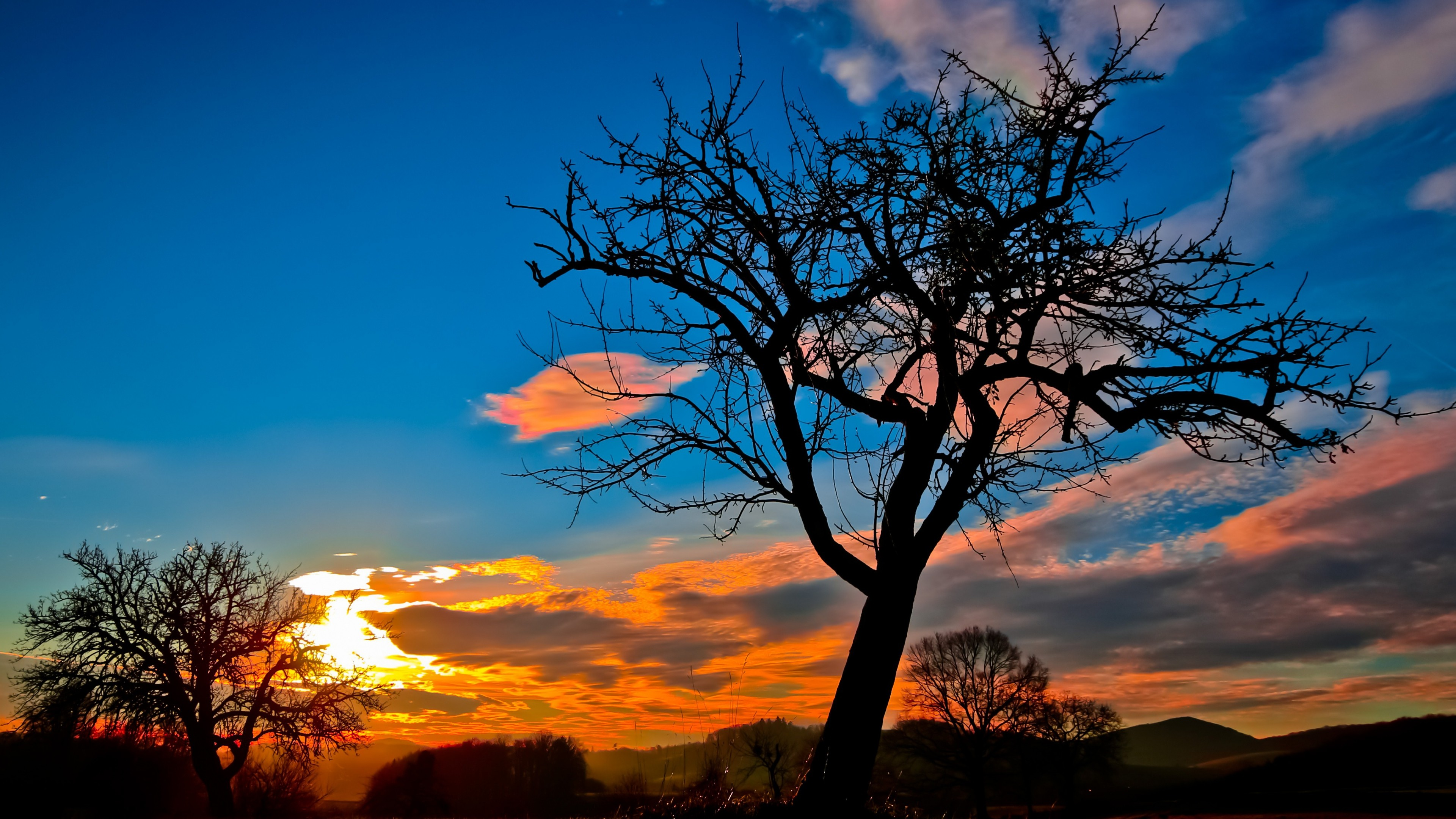 sunset trees sky hd nature 4k wallpapers images