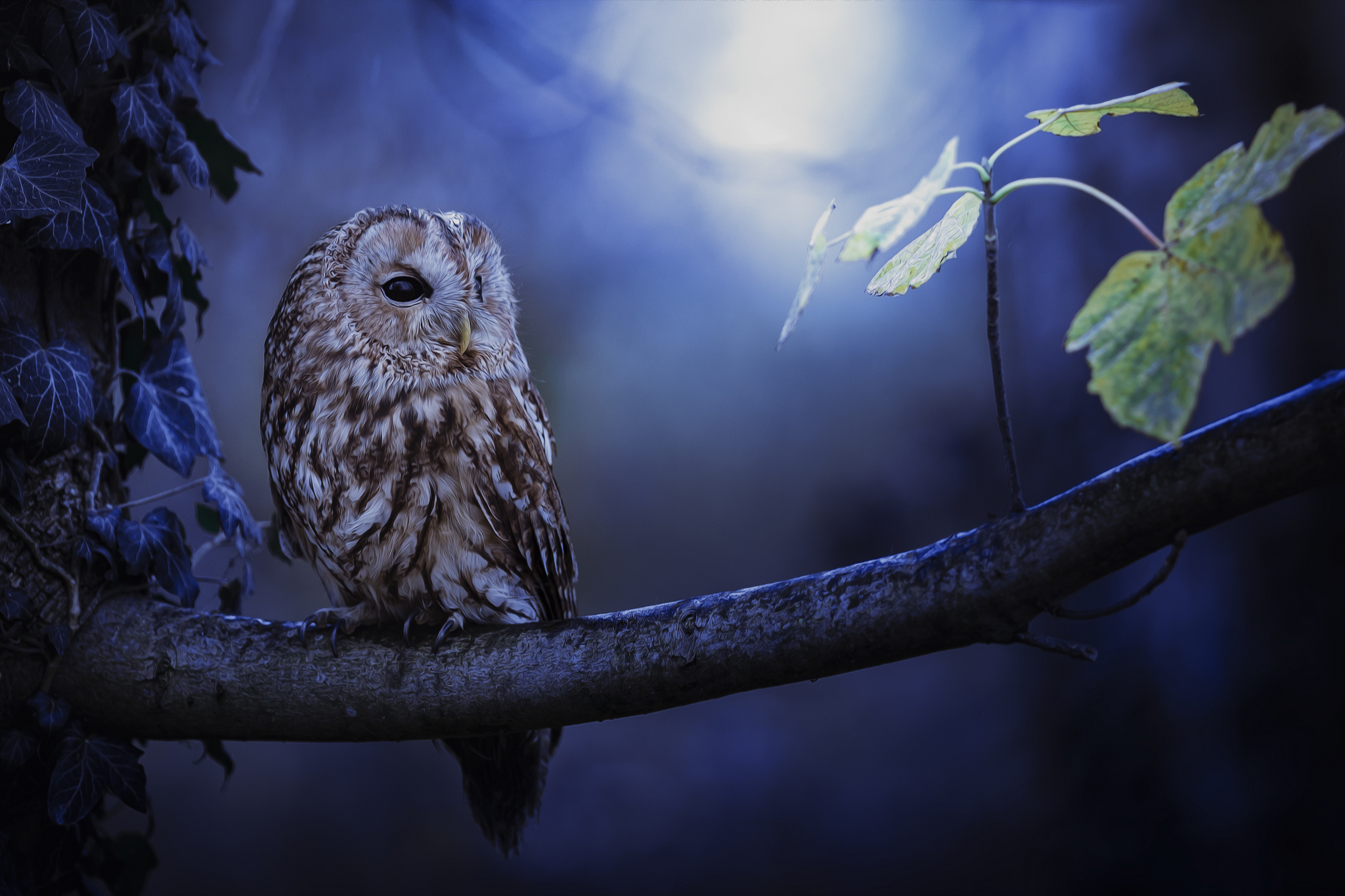 tawny owl in moonlight hd animals 4k wallpapers images