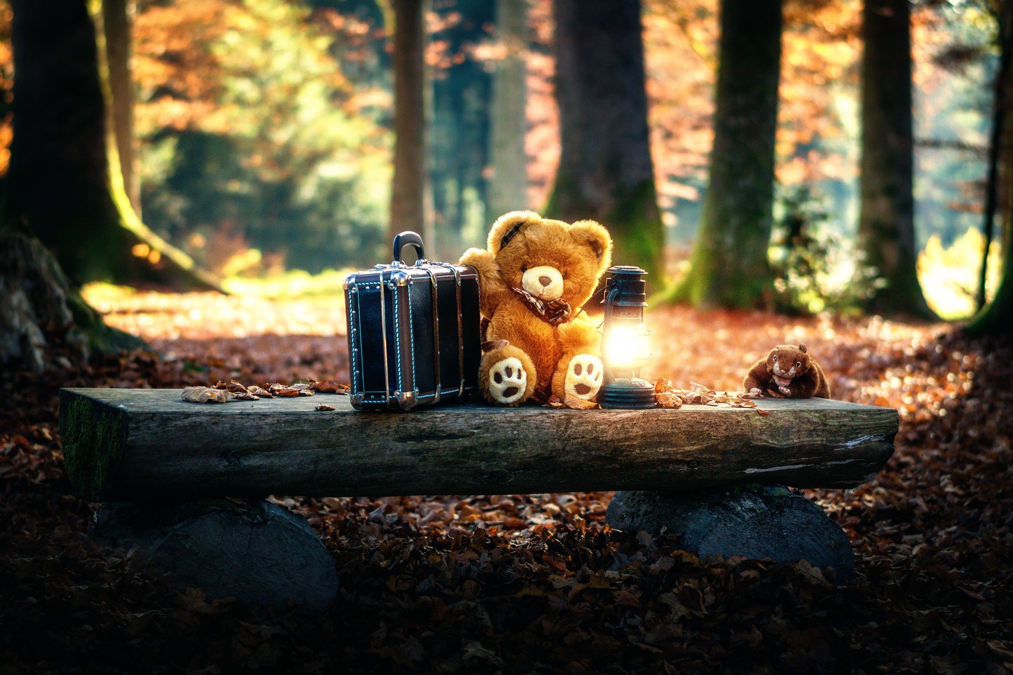 Teddy Bears Cute Alone in Forest