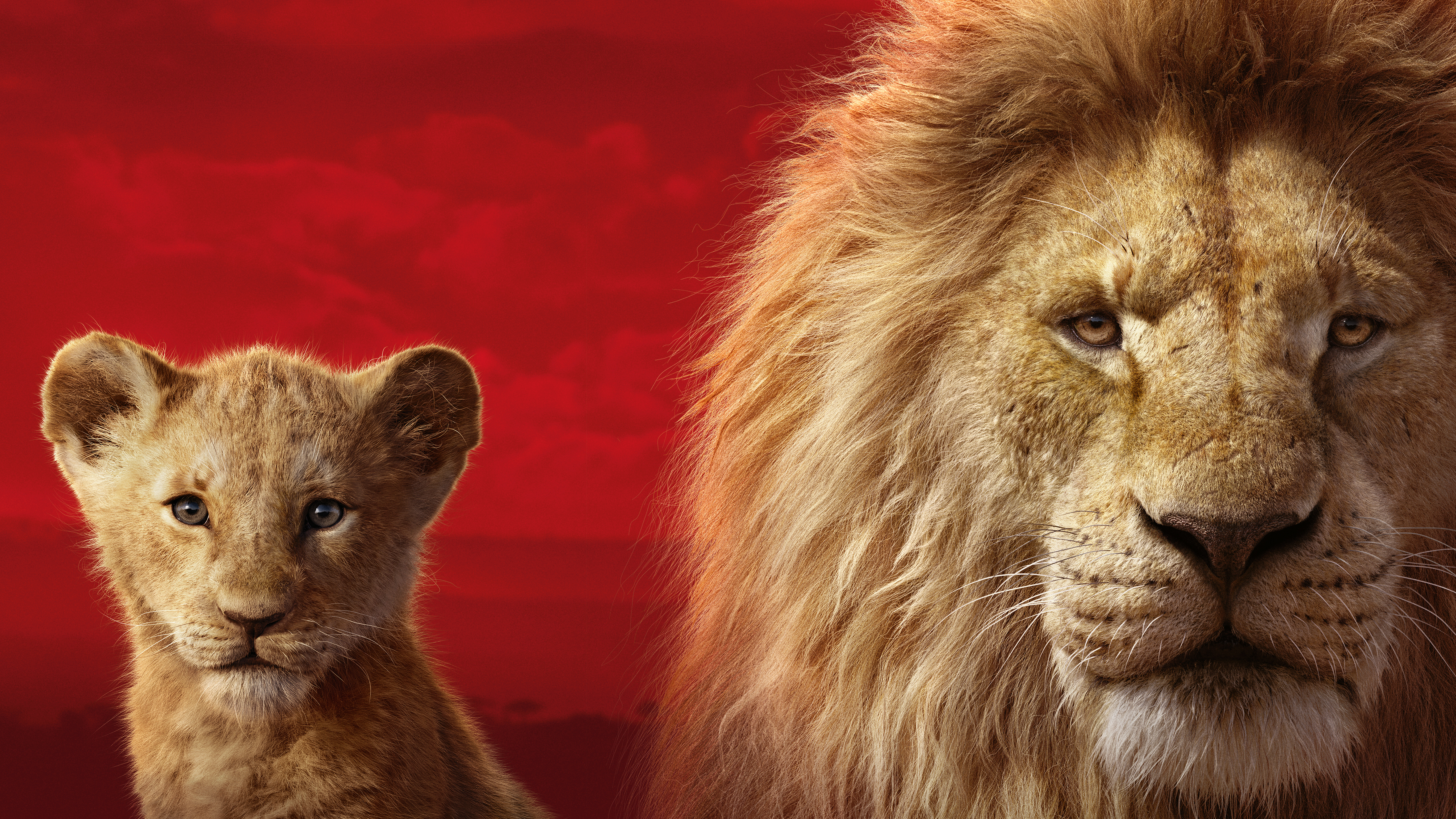 The Lion King 2019 5k Hd Movies 4k Wallpapers Images