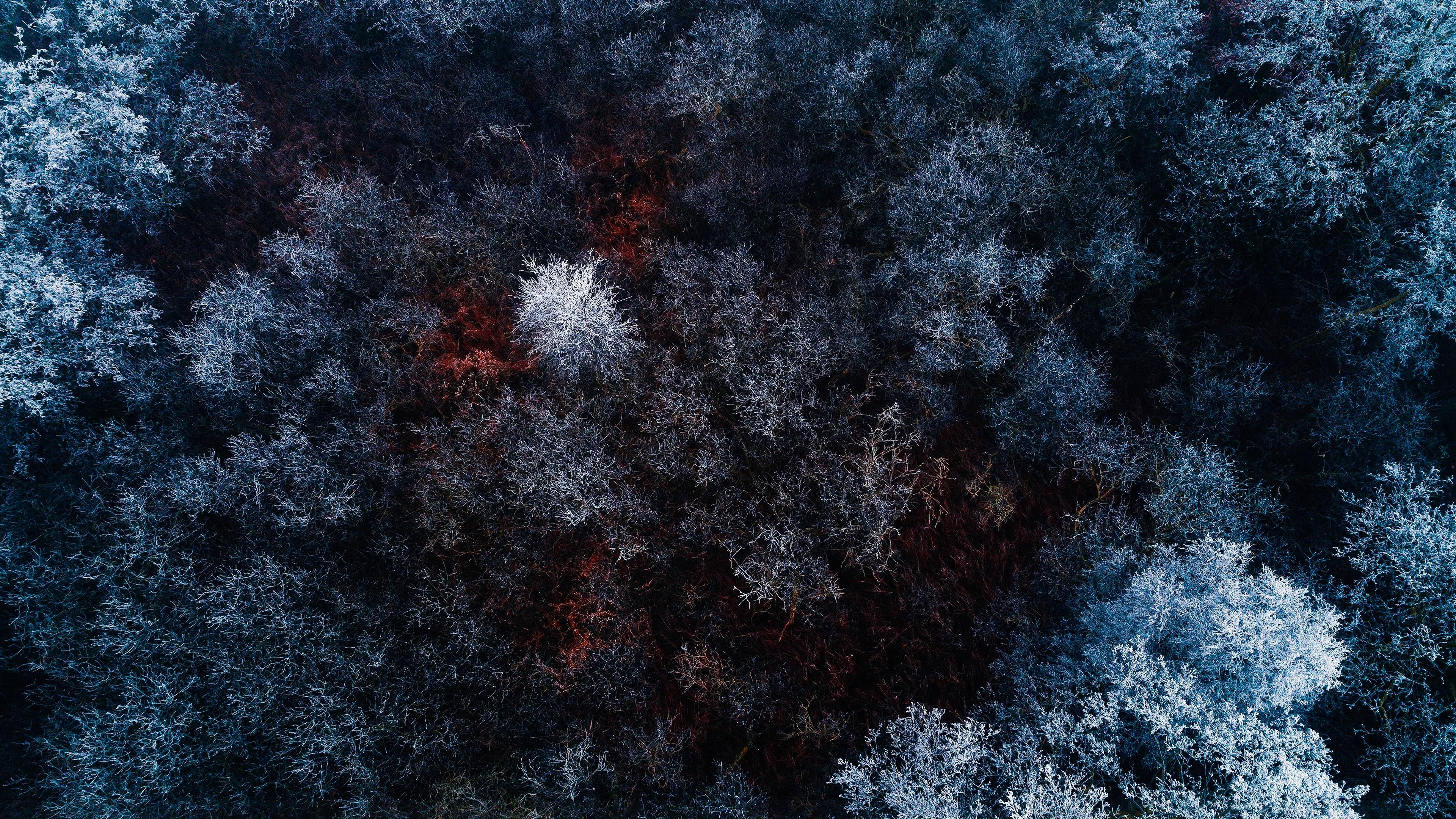 The Red Ice Forest