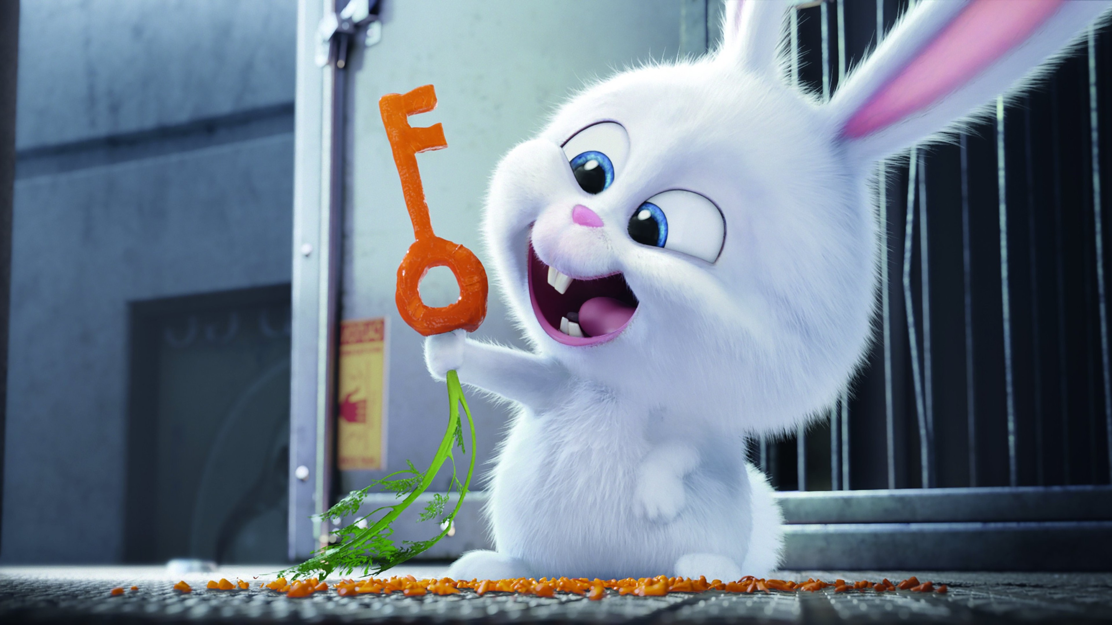The Secret Life Of Pets 2016 Hindi Download: The Secrete Life Of Pets Bunny, HD Movies, 4k Wallpapers