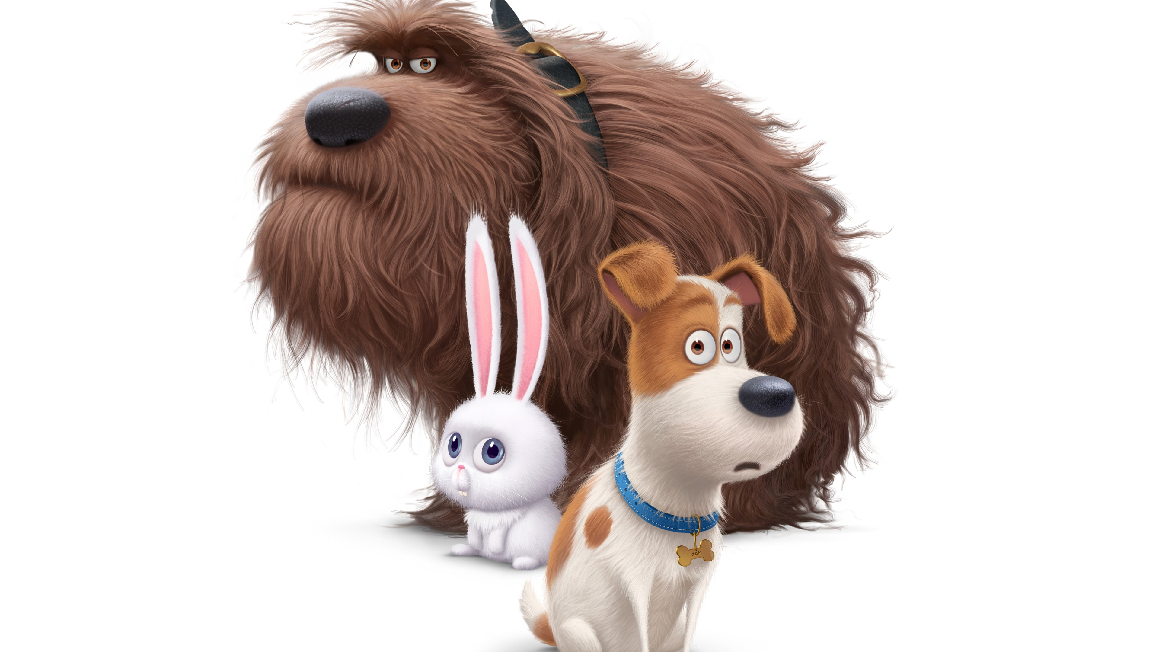 Secret Life Of Pets Wallpaper: The Secrete Life Of Pets Movie Dogs, HD Movies, 4k