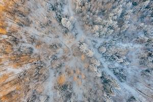 Aerial Short Of Cold Forest Snow Trees 4k