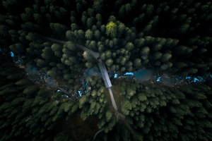 Aerial View Forest 4k Wallpaper