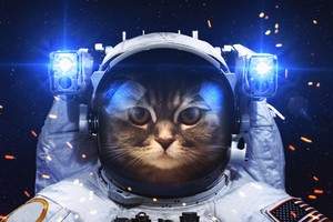 Astronaut Cat Wallpaper