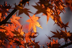 Autumn Leaves 4k 5k Wallpaper