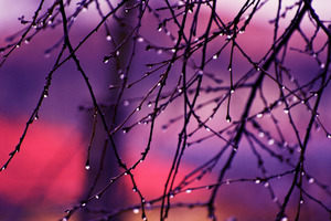 Autumn Rain Drops On Tree Branches 4k Wallpaper