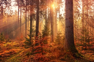 Autumn Sunbeams Forest Light Rays 5k Wallpaper
