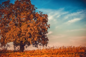 Autumn Tree Branches 4k