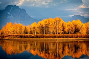 Autumn Trees On Lake