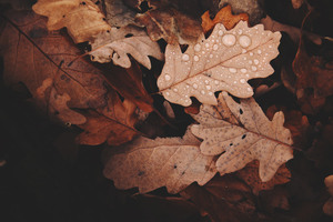Autumn Withered Leaves Wallpaper