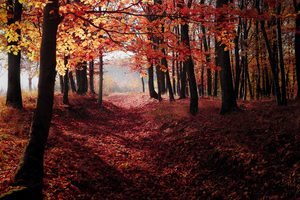 Autumn Woods Trees Fall Forest 5k Wallpaper