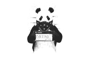 Bad Panda Wallpaper