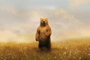Bear In Field