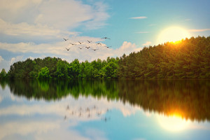 Beautiful Lake Birds Flying Wallpaper