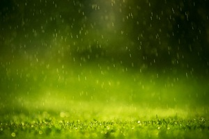 Beautiful Rain Drops Wallpaper